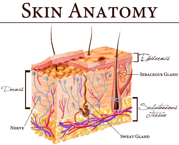 Skin Care, Skin Anatomy, Skin Care Cosmetic Treatments, Mumbai, India